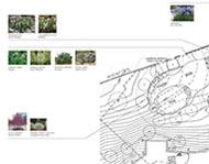 planting plan image
